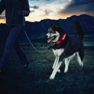 nite-dawg-nite-ize-hunde-halsband-led-beleuchtet-hundehalsband-medium-mittelgross